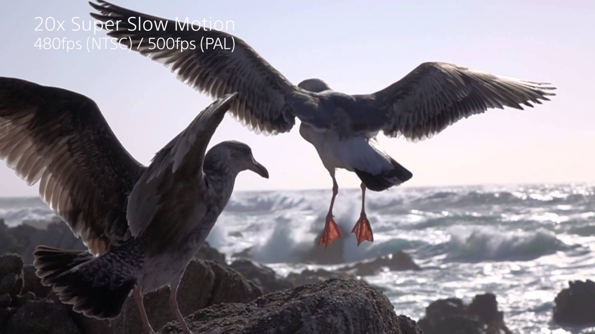 Sony Rx100 Iv Amp Rx10 Ii Cameras Super Slow Motion Seagulls
